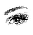 beautiful female eye sketch vector image