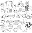 Collection of fruit in sketch style vector image