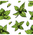 seamless pattern with mint mint drawing vector image vector image