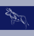 zodiac sign-taurus vector image vector image