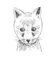 hand drawn portrait funny fox baby vector image vector image
