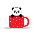 panda sits in a mug vector image vector image