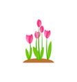 summer and spring blossom forest and garden pink vector image vector image