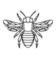 bee isolated on white background vector image
