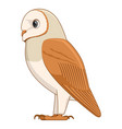 barn owl bird on a white background vector image vector image