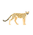 cheetah isolated on white background graceful vector image vector image