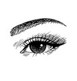 lady beautiful eye sketch vector image
