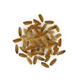 realistic rice isolated vector image vector image