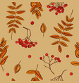 seamless pattern rowan berries hand vector image