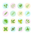 set flat icons greenery vector image vector image