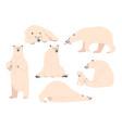 set white bear wild polar arctic animal predator