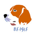 beagle dog head on white background vector image vector image