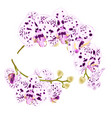 branches orchids dots purple and white flowers vector image vector image