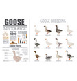 poultry farming infographic template goose vector image vector image