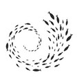 spiral of fish shoal vector image vector image