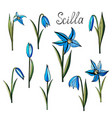 hand drawn scylla flowers vector image
