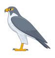 peregrine falcon bird on a white background vector image vector image
