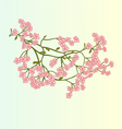 Spring flowers Cherry blossoms background vector image