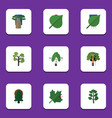 flat icon bio set of timber oaken forest and vector image vector image