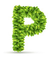 Letter P alphabet of green leaves vector image