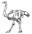 ostrich drawing on white background vector image vector image