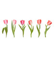 realistic tulips set spring pink flowers vector image vector image