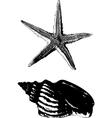 shell and starfish vector image vector image
