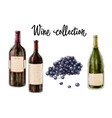 three bottles of wine and grape cluster isolated vector image