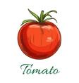 Tomato fruit vegetable icon vector image