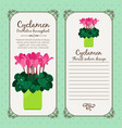 vintage label with potted flower cyclamen vector image vector image
