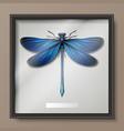 calopteryx virgo dragonfly vector image vector image