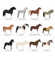 horse breeding icon set farm animal flat design vector image vector image
