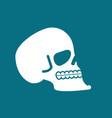 skull isolated head of human skeleton anatomy vector image vector image