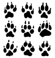 wolf paw vector image