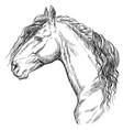 horse portrait-15 vector image vector image