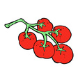 tomatoes on vine vector image vector image