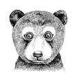 hand drawn portrait funny bear baby vector image vector image