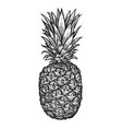 pineapple with leaves tropical summer fruit vector image