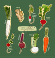 root vegetables collection hand draw sketch vector image vector image