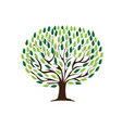 green leaves tree vector image vector image