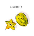 hand drawn abstract exotic tropical fruit vector image