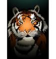 Tiger watching in the dark vector image vector image