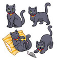 cute russian blue cat set vector image vector image