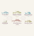 hand drawn fish and seafood labels set in retro vector image