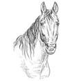 horse portrait-19 vector image