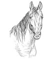 horse portrait-19 vector image vector image