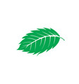 mint leaf logo designs inspiration isolated on vector image vector image