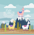set of cute lama and cactus mountaine vector image