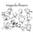 collection of magnolia flower and leaves vector image vector image