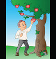 man picking apples from a tree vector image